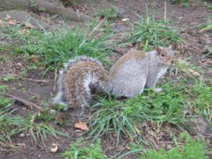 фото белки лондон сент-джеймский парк