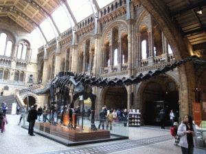 Музей естественной истории в Лондоне  диплодок скелет