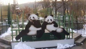 посетить Зоопарк в Вене стоит обязательно