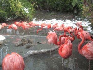 розовые фламинго зоопарк вена фото