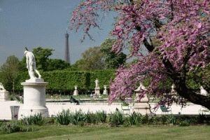 Сад Тюильри (Jardin des Tuileries) в центре Парижа