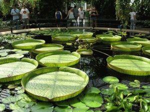 Kew Gardens Оранжерея Принцессы Уэльской