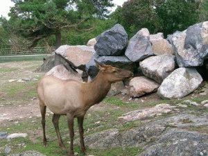 Korkeasaari Зоопарк ориентирован на сохранение редких животных