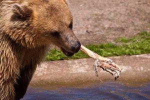 Korkeasaari медведь Время работы зоопарка Коркеасаари в Хельсинки