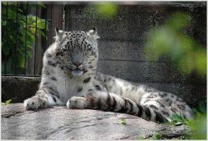 Korkeasaari богатая коллекция кошачьих