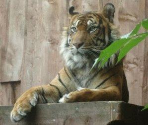 london-zoo животные Лондонского зоопарка