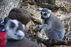 london-zoo посетить с детьми фото
