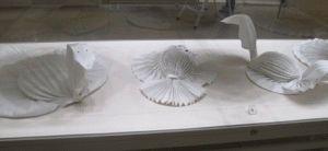 Хофбург витрины со сложенными столовыми салфетками фото