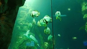 Haus des Meeres Дом моря в Вене аквариум фото