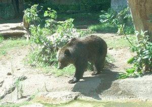 зоопарк биопарк в Риме фото