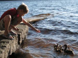 летний отдых в Финляндии с детьми фото