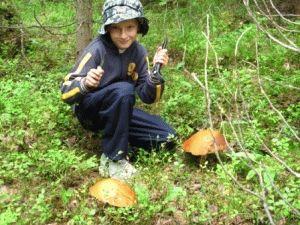 грибы в финляндии фото