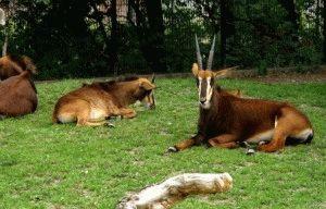 praga zoo пражский зоопарк фото