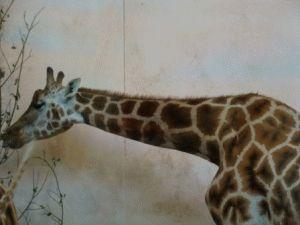 Зоопарк в Праге животные фото жираф