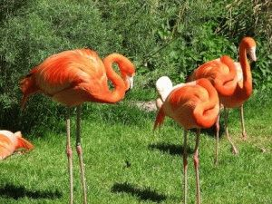 Зоопарк в Праге фламинго фото