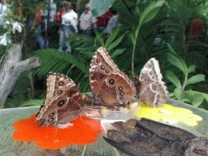 оранжерея бабочки фото ботанический сад прага