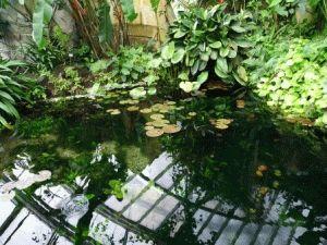 Павильон Фата Моргана фото прага ботанический сад