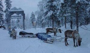Олений парк Рованиеми катание на оленях фото