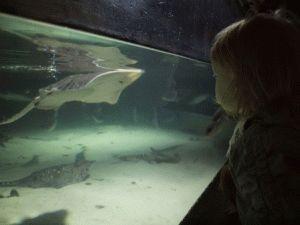 лондонский аквариум фото