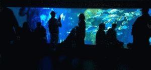 аквариум лондон фото
