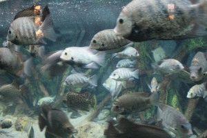лондонский аквариум рыбы фото