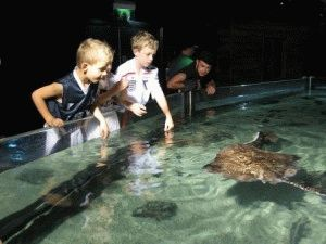 гладить проплывающих мимо скатов в Лондонском аквариуме фото