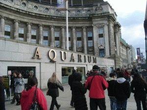 Лондонский Аквариум - Морская жизнь в центре Лондона фото