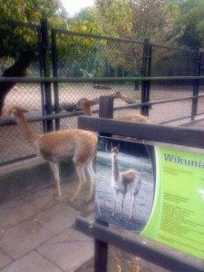 зоопарк в варшаве фото