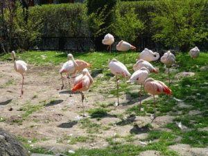 Краковский зоопарк фото