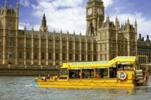 Лондонский утенок амфибия фото