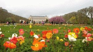 Ботанический сад растений в Париже фото