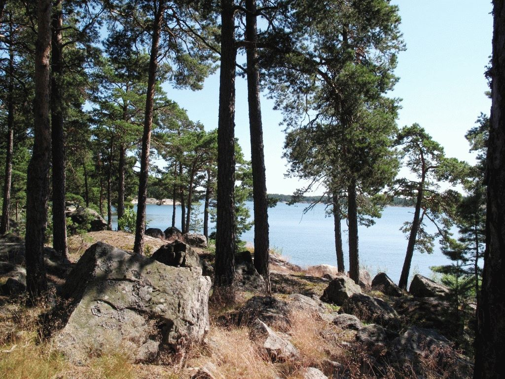 архипелаг Турку сосны фото