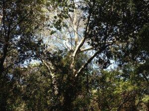 национальный парк Чирчео Сабаудия фото