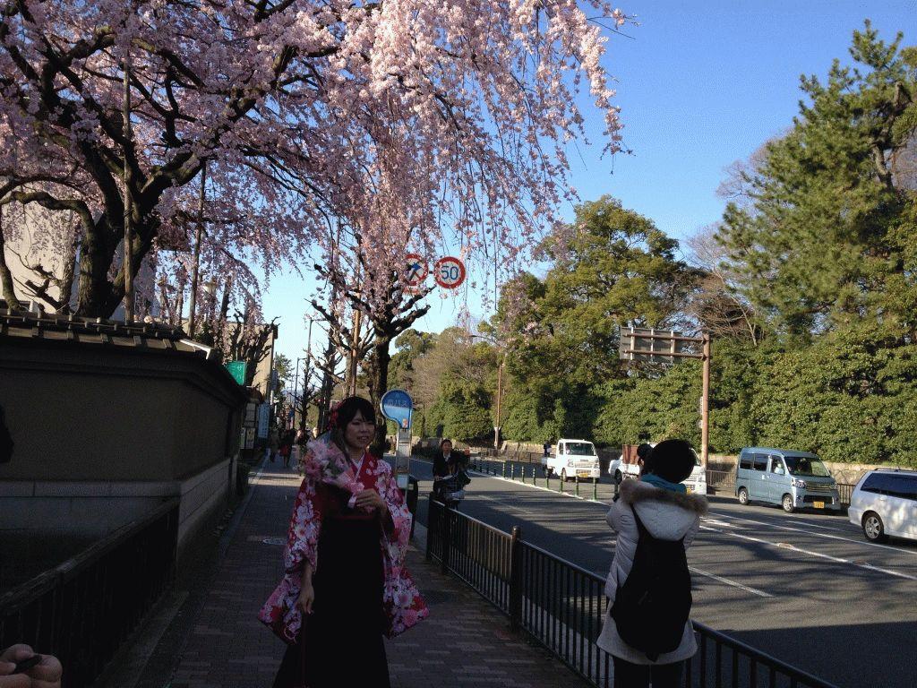 фотографии на фоне сакуры