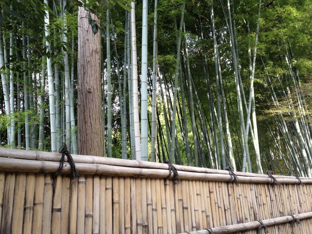 бамбуковая роща киото фото