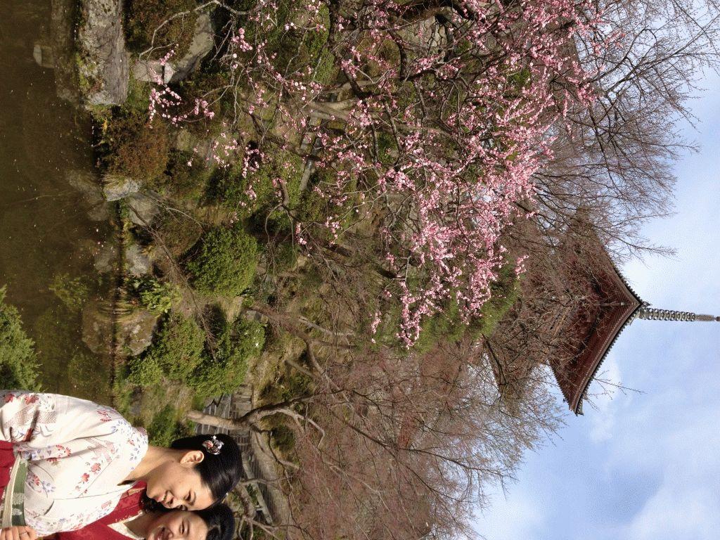 девушки в кимоно на фоне сакуры, Киото, Храм чистой воды