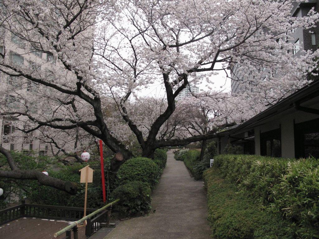 Takanawa Prince Hotel фото японский сад