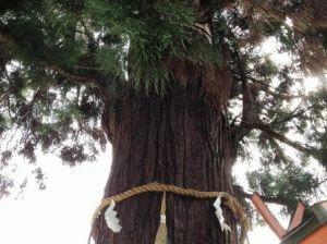 витая веревка вокруг дерева синтоизм в японии фото