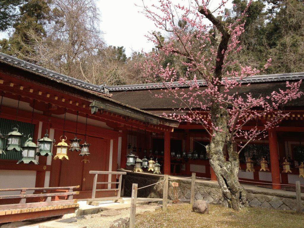 Касуга Тайся фото Нара Япония