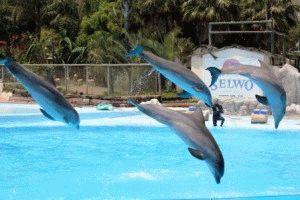 Бенальмадена дельфины фото