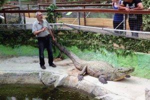 самый тяжеловесный крокодил