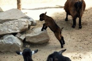 Сафари парк Selwo Aventura Испания контактный зоопарк фото
