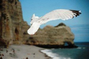 Пляжи нормандии фото