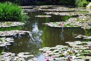 Живерни лилии фото Франция