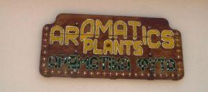 крит ароматические травы фото