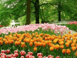 Голландия в мае фото