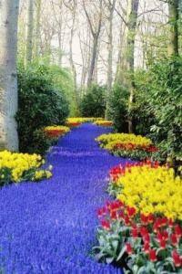 парк цветов голландия фото