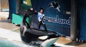 дельфинарий Marineland антиб франция фото