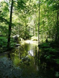 Национальный парк Биоградска Гора черногория фото