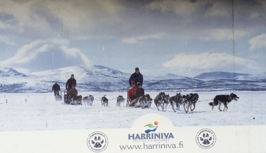 harniva-haski-katanie-na-sobakah